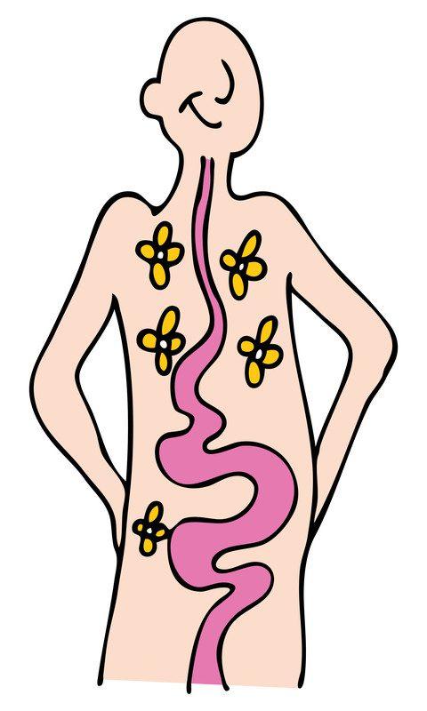 """Résultat de recherche d'images pour """"Absorb  nutrients"""""""